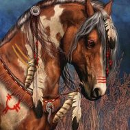 The Compelling Background of the American Indian Horse